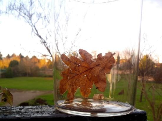 vasu sidra invernal